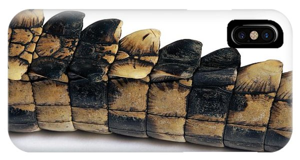 Crocodile iPhone Case - Tail Of A Young Nile Crocodile by Pascal Goetgheluck/science Photo Library
