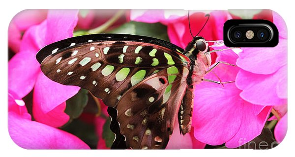 Tailed Jay Butterfly #4 IPhone Case