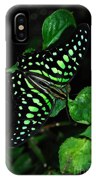 Tailed Jay Butterfly IPhone Case