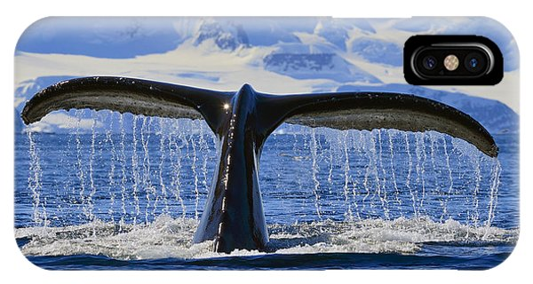 Tails From Antarctica IPhone Case