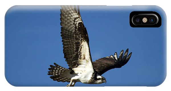 Ospreys iPhone Case - Take Flight by Mike  Dawson