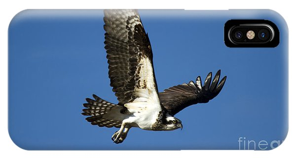 Osprey iPhone Case - Take Flight by Mike  Dawson