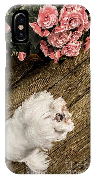 Havanese Puppy IPhone Case