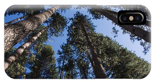 Talls Trees Yosemite National Park IPhone Case