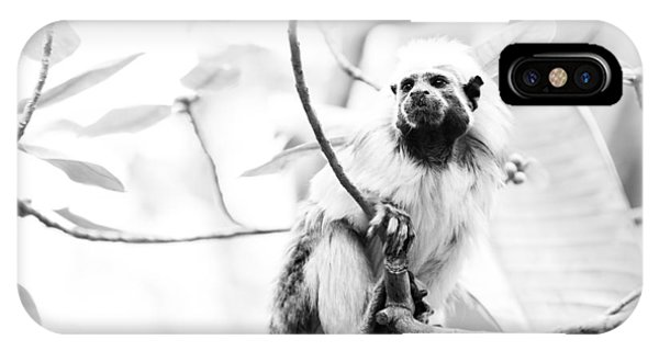Tamarin Phone Case by Andy Fung
