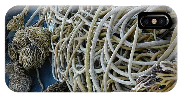 Tangles Of Seaweed 2 IPhone Case