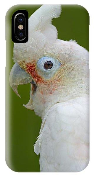 Tanimbar Correla IPhone Case
