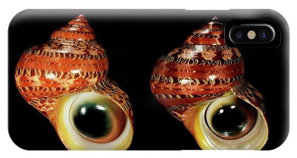 Tapestry Turban Sea Snail Shells IPhone Case