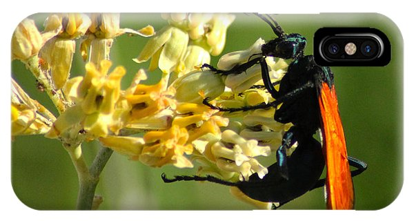Tarantula Hawk Wasp IPhone Case