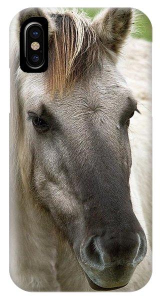 Tarpan Horse Phone Case by Bob Gibbons