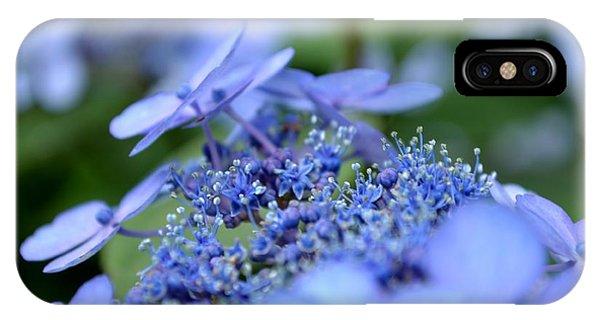 Taube Lacecap Hydrangea IPhone Case