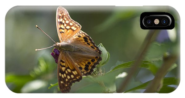 Tawny Emperor On Hibiscus IPhone Case