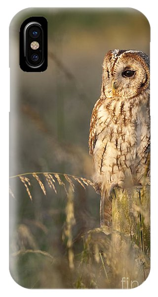Tawny Owl IPhone Case