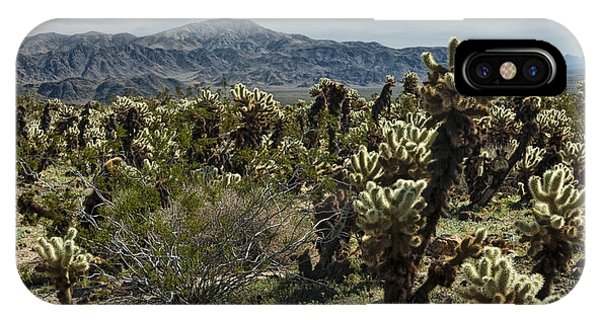 Teddy Bear Cholla iPhone Case - Teddy Bear Cholla Cactus In California 0253 by Randall Nyhof