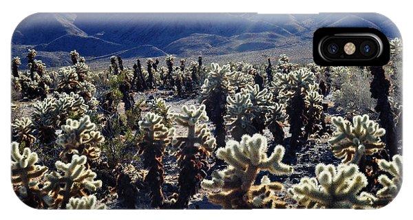 Cylindropuntia Bigelovii iPhone Case - Teddy Bear Cholla Cactus by Kyle Hanson