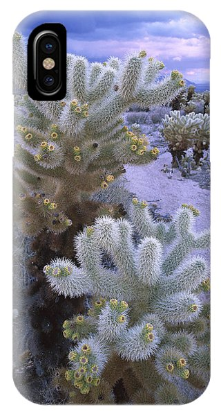 Teddy Bear Cholla iPhone Case - Teddy Bear Cholla Catus Blooming by Tim Fitzharris