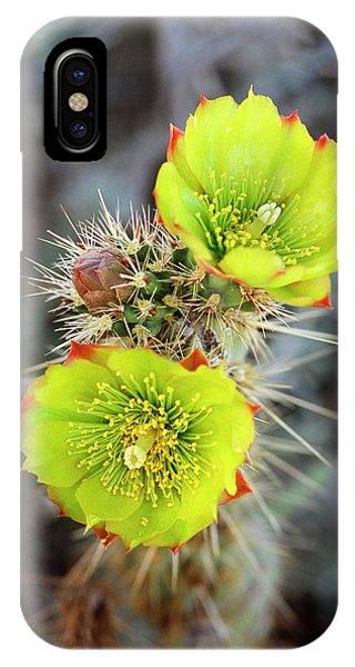 Opuntia Bigelovii iPhone X Case - Teddy-bear Cholla (opuntia Bigelovii by John Barger