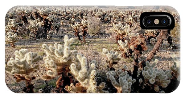 Opuntia Bigelovii iPhone Case - Teddybear Cholla (opuntia Bigelovii) by Bob Gibbons/science Photo Library