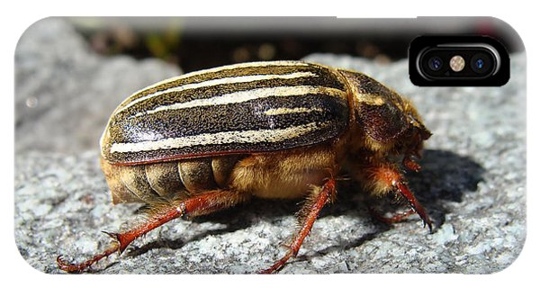 Ten-lined June Beetle Profile IPhone Case