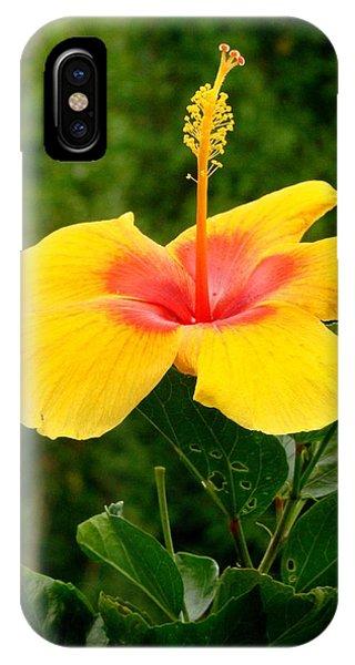 Tequila Sunrise IPhone Case