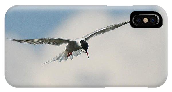 Tern In Flight IPhone Case
