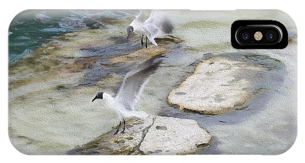 Tern On The Shore IPhone Case