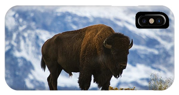 Teton Bison IPhone Case