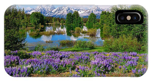 Teton Spring Lupines IPhone Case