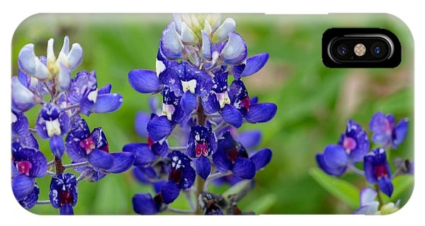 Texas Bluebonnets IPhone Case