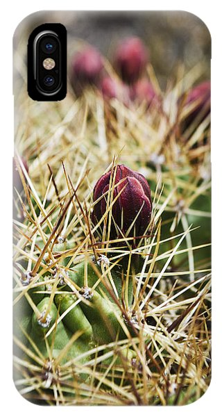 Texas Blooming Cactus IPhone Case