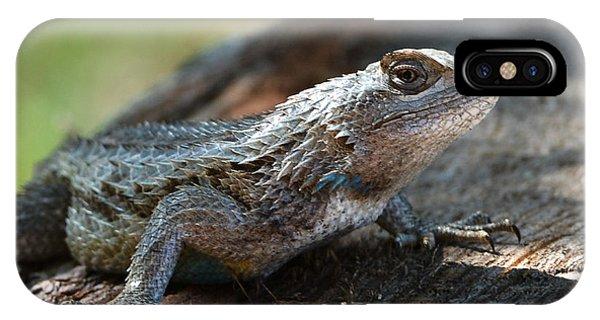 Texas Lizard IPhone Case