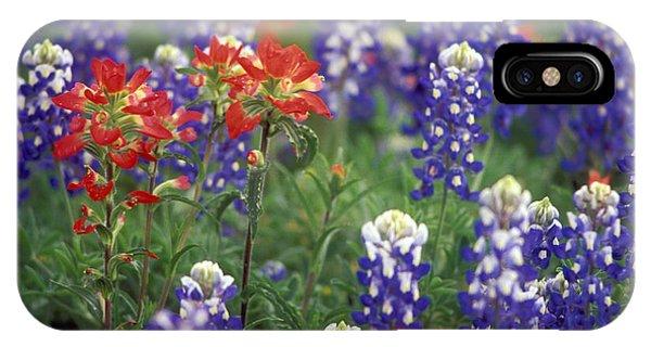 Scarlet Paintbrush iPhone Case - Texas Wildflowers 2 - Fs000927 by Daniel Dempster