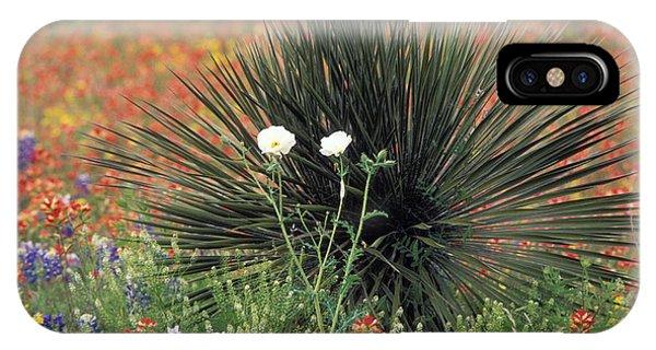 Scarlet Paintbrush iPhone Case - Texas Wildflowers - Fs000924 by Daniel Dempster
