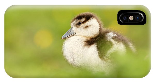 Goslings iPhone Case - The Gosling In The Grass by Roeselien Raimond