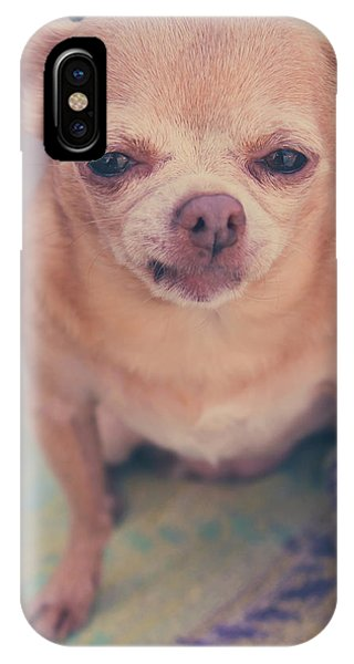 Chihuahua iPhone Case - That Little Face by Laurie Search