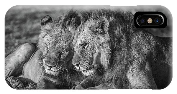 Lions iPhone Case - The Aging Alliance. by Jeffrey C. Sink