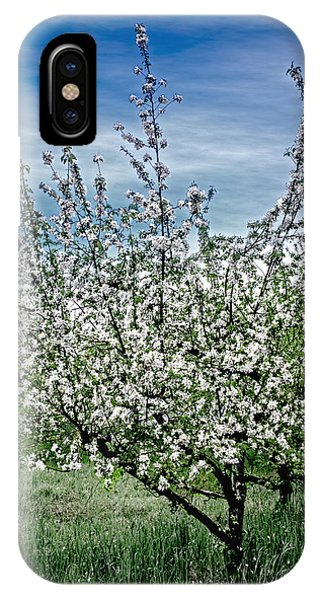 The Apple Tree Blooms IPhone Case