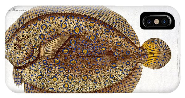 Ichthyology iPhone Case - The Argus Flounder by Andreas Ludwig Kruger