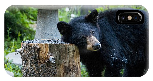 The Bear Cub With An Itch IPhone Case