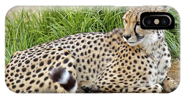 The Beautiful Cheetah IPhone Case