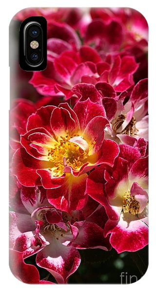 The Beauty Of Carpet Roses  IPhone Case