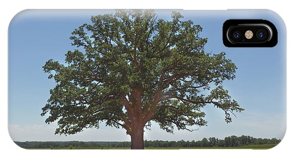 The Big Tree IPhone Case