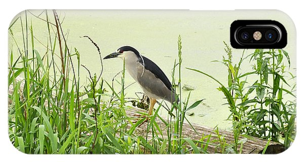 The Black-crowned Night Heron IPhone Case