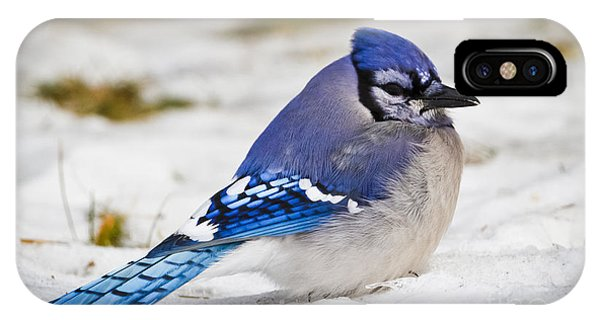 The Bluejay IPhone Case