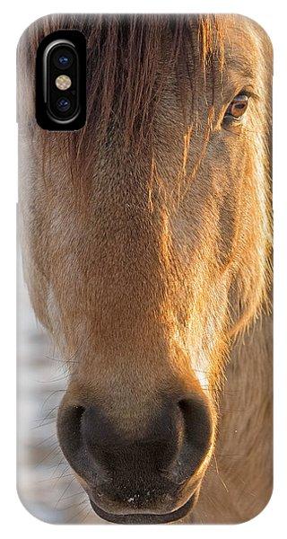 The Buckskin Stallion IPhone Case