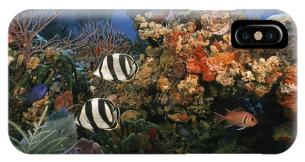 The Butterflyfish On Reef IPhone Case