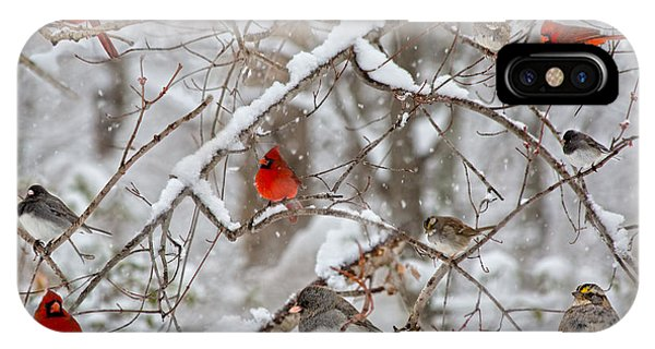 Cold Day iPhone Case - The Cardinal Rules by Betsy Knapp