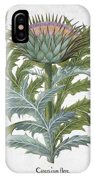 The Cardoon, From The Hortus IPhone Case