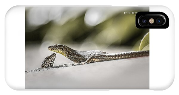 IPhone Case featuring the photograph The Charming Lizards by Stwayne Keubrick
