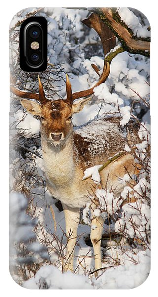 The Christmas Deer - Fallow Deer In The Snow IPhone Case